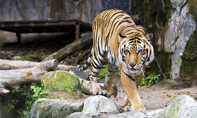 Smithsonian National Zoo: Tours, Activities & Live Animals