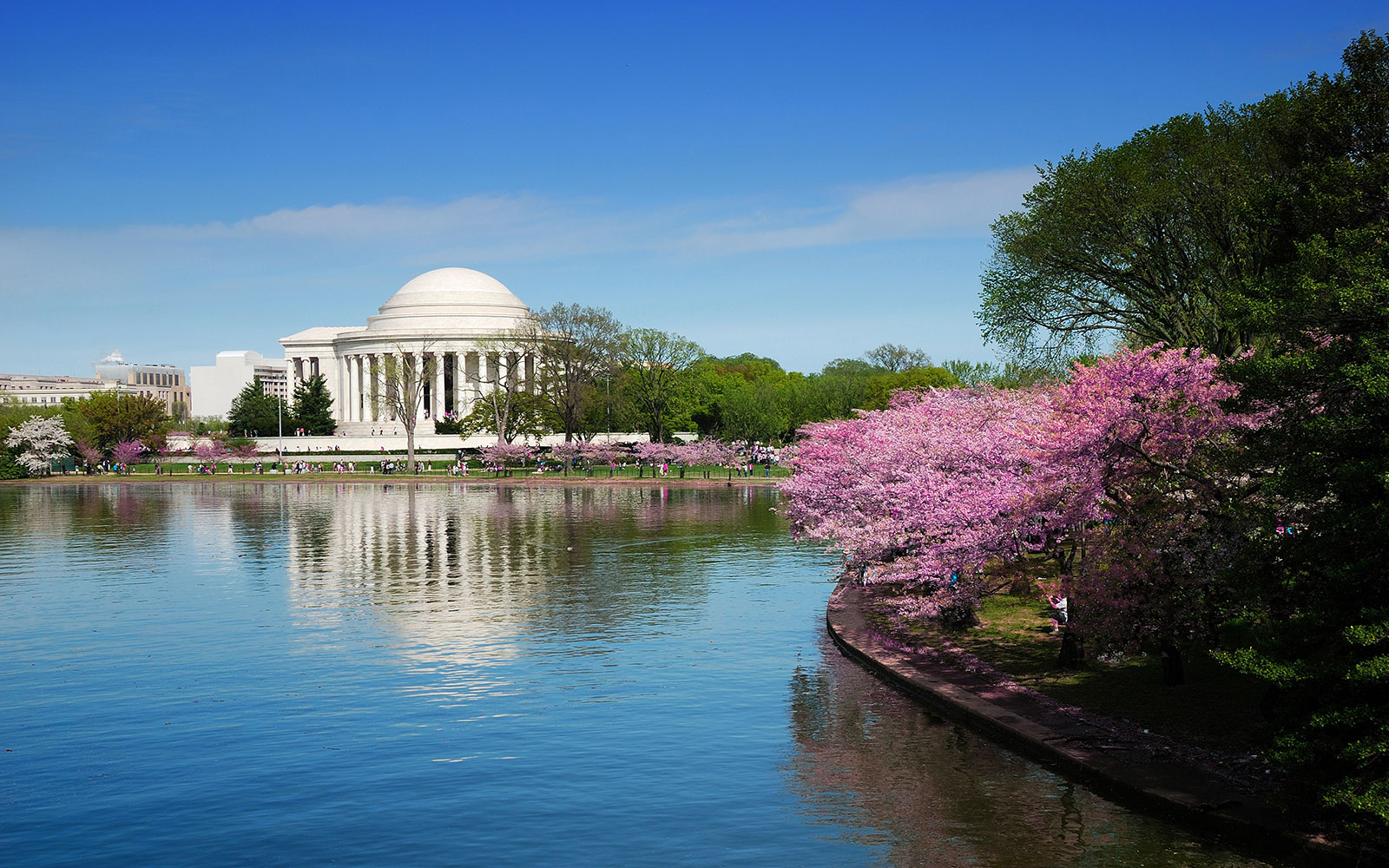 Cherry Blossoms Things To Do In Washington Dc Monuments Museums